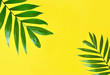 Leinwanddruck Bild - Palm Leaves on Yellow Background