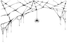 Black Spider And Torn Web. Sca...