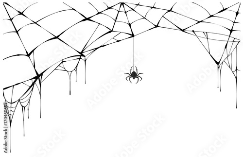 Photo Black spider and torn web. Scary spiderweb of halloween symbol