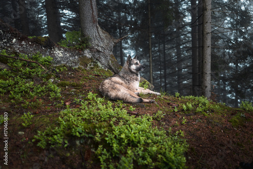 Fotografía  Dog sits in a mystical forest