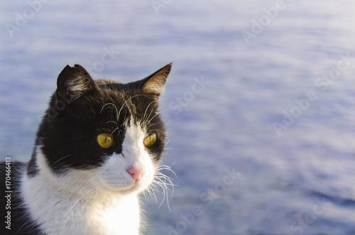 Fotografie, Obraz  denize bakan kedi