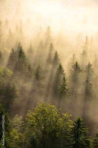 Obraz Misty forest - fototapety do salonu