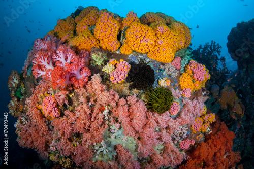 Fototapety, obrazy: Vibrant Coral Reef in Indonesia