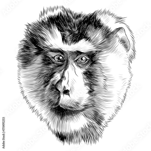 Deurstickers Hand getrokken schets van dieren monkey head sketch vector graphics black and white monochrome pattern