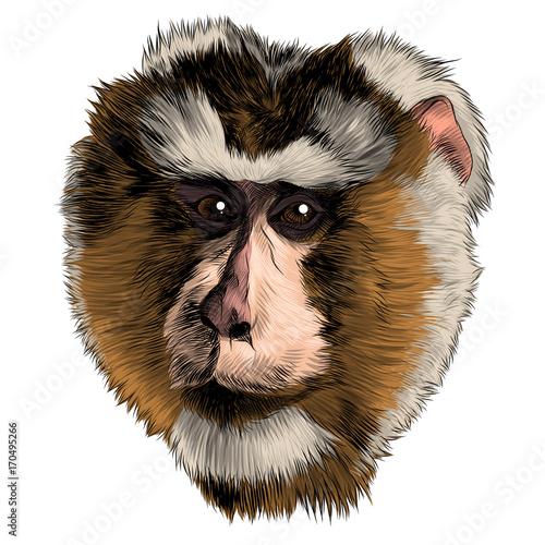 Deurstickers Hand getrokken schets van dieren monkey head sketch vector graphics color picture