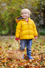 Cute Little Boy Picking Mushro...