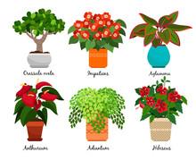 House Flowers And Indoor Flowerpots