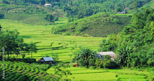 Tuinposter Lime groen Landscape of rice field in Vietnam.
