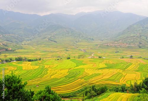 Staande foto Meloen Landscape of rice field in Vietnam.