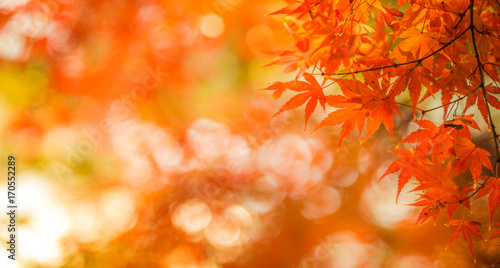 Foto op Canvas Herfst autumn leaves, very shallow focus