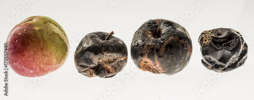 Apples in various states of decay isolated on white Tablou Canvas