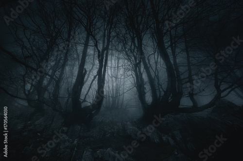 Spoed Fotobehang Bos nightmare forest with creepy trees