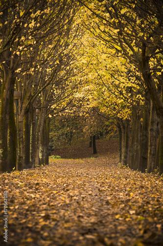 Foto op Canvas Herfst Autumn landscape with beautiful autumn leaves
