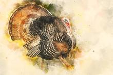Wild Eastern Turkey With Copy ...