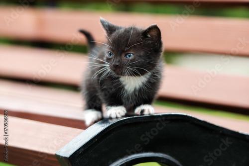 Plakat mały czarny kotek pozowanie na zewnątrz