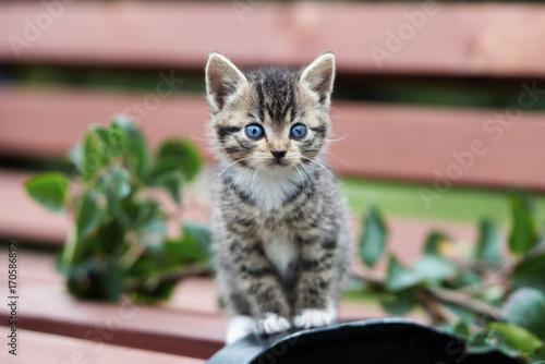 Plakat uroczy pręgowany kotek stojący na zewnątrz