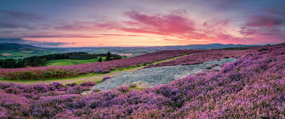 Panorama at Twilight over Rothbury Heather, on the terraces, which walk offers views over the Coquet Valley to the Simonside and Cheviot Hills, heather covers the hillside in summer