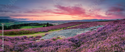 Fototapeta Panorama at Twilight over Rothbury Heather, on the terraces, which walk offers views over the Coquet Valley to the Simonside and Cheviot Hills, heather covers the hillside in summer obraz