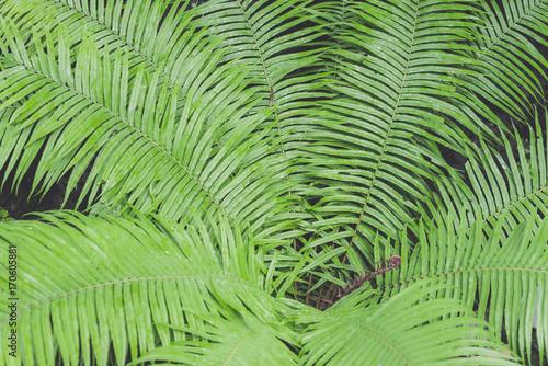 Ingelijste posters Tropische Bladeren Closeup background of green leaves fern