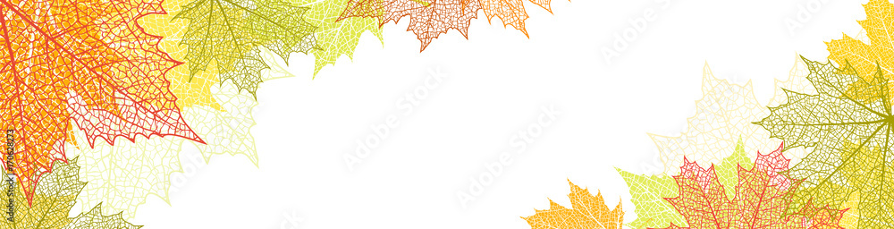 Fototapety, obrazy: Nature banner with autumn leaves
