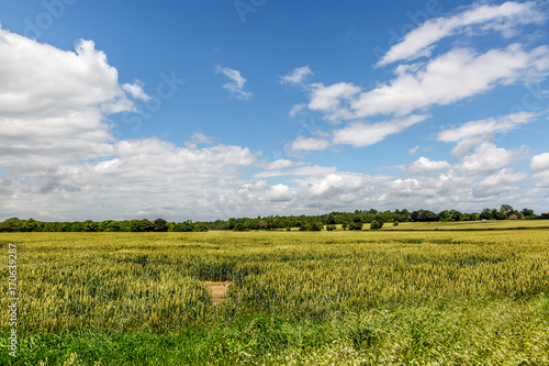 Fotografering Nature in an area of Norfolk on a sunny day, England