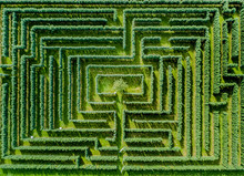 Aerial View Of Maze Made Of Trees And Bush