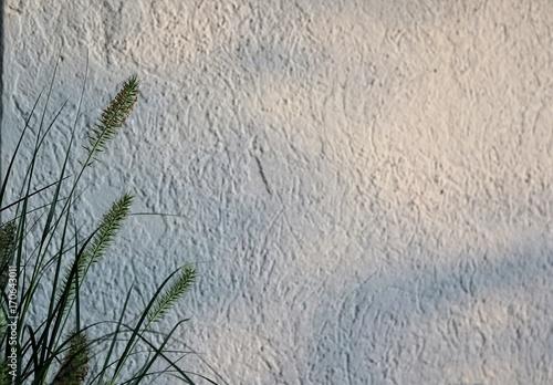 Fotografie, Obraz  weisser hintergrund mit korn