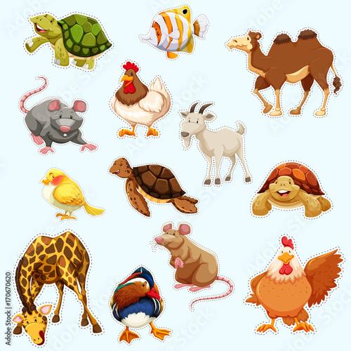 Fotografía  Sticker design with wild animals