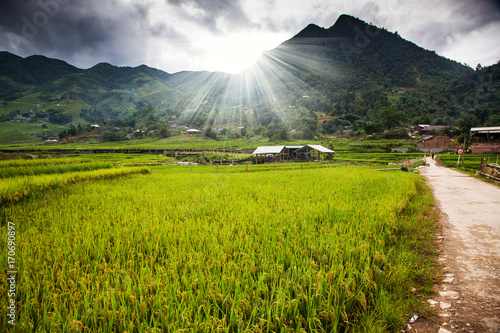 Garden Poster Rice fields green rice fields in Ta Phin village, Sa Pa, Vietnam