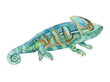 Green Chameleon Isolated On White Background. Watercolor. Illustration. Template. Picture. Clipart