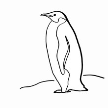 Realistic Penguin  Drawing