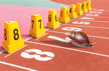 Snail Ready On Start Running Track For Competition In Stadium
