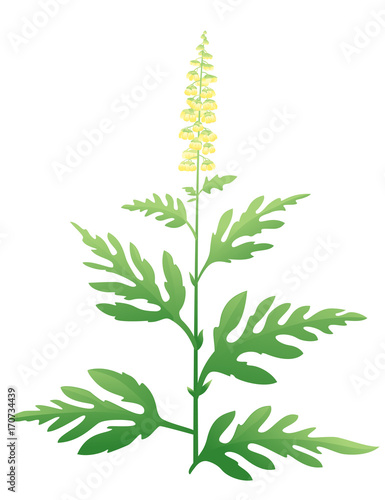 Ragweed Plant Wallpaper Mural