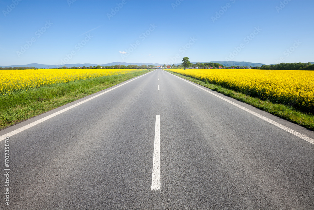Fototapeta Asphalt road among the summer field