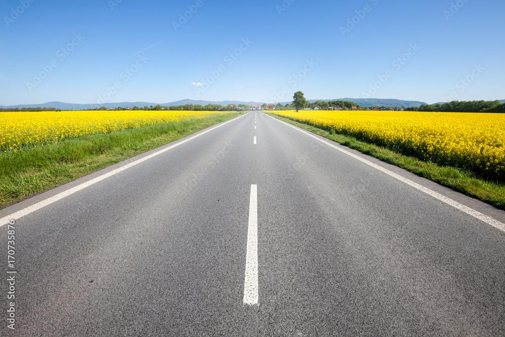 Fototapety, obrazy: Asphalt road among the summer field