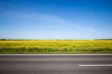 Asphalt Road Among The Summer Field