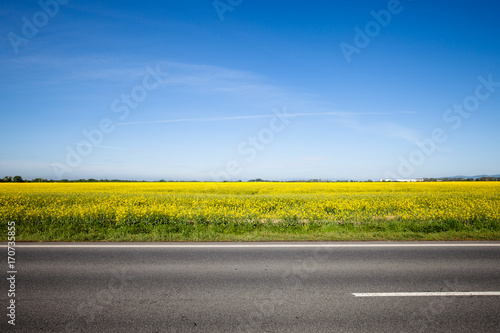 Photo Asphalt road among the summer field