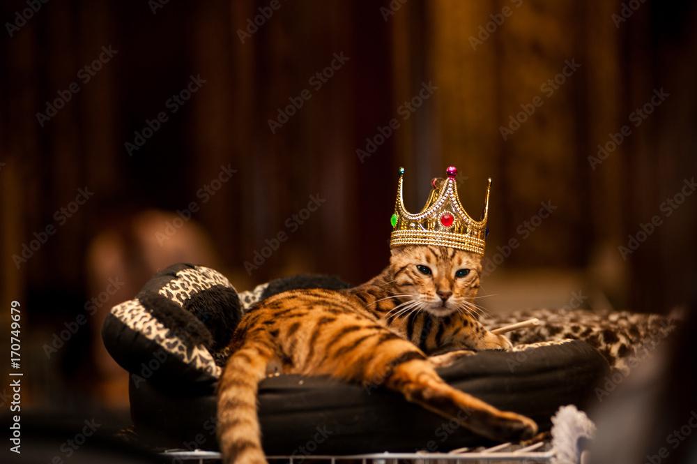 Fototapeta Cat king