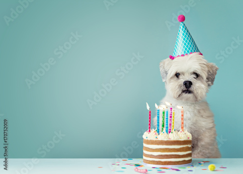 Fotobehang Hond Dog with birthday cake