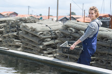 Worker In Oyster Farm Collecting Cages With Oysters
