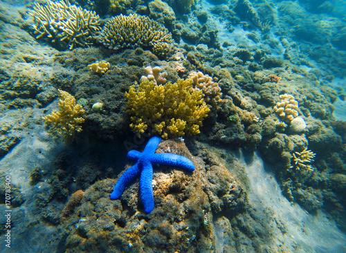 Tropical seashore underwater landscape. Coral reef and blue starfish.