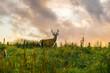 Beautiful view of deer on Isle of Skye, Scotland