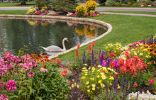 Garden Lake With Swan And Flow...
