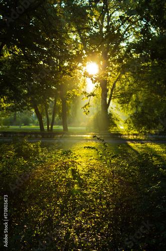 Keuken foto achterwand Bossen First sunrays at autumn morning in Topcider park, Belgrade, Serbia