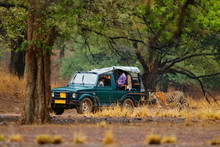 Car With Wild Tiger. Holiday In Ranthambore NP, India. End Of Dry Season, Beginning Monsoon. Tiger Walking On Gravel Road. Nature Travel, Wild Animal In The Nature Habitat. Big Cat With People In Car.