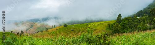 Cadres-photo bureau Les champs de riz Green Terraced Rice Field in Pa Pong Pieng , Mae Chaem, Chiang Mai, Thailand