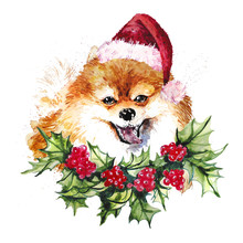 Watercolor Artistic Orange Pomeranian Dog In Santa Hat And Holly Wreath Portrait Isolated On White Background. Cute Pet Head Hand Drawn. Pomeranian Puppy. New Year Symbol, Christmas Card, Xmas Emblem.