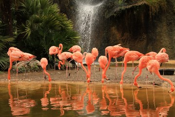 FototapetaFlamingos in waterfall