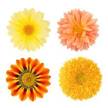 Set Of Flowers With Dahlias, G...
