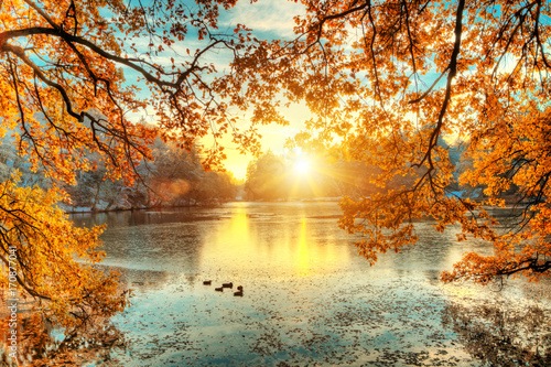 Poster Oranje eclat Beautiful colored trees with lake in autumn, landscape photography